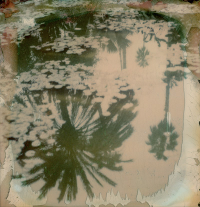 reflet-palmier