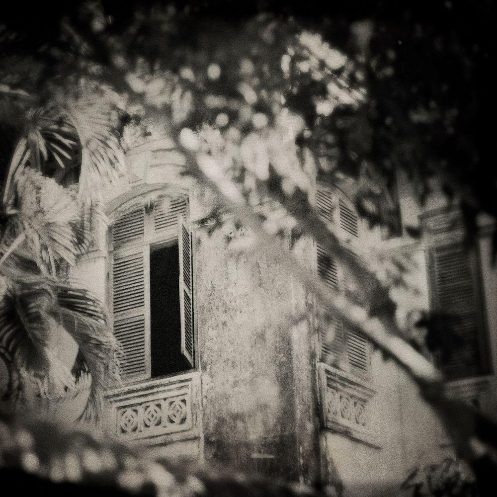 Lointains souvenirs, © FLORE-671